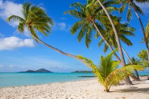 beach sea sand landscape palm trees summer white french polynesia island nature tropical bora bora