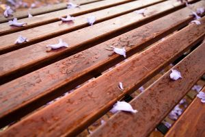 bench wooden surface leaves outdoors