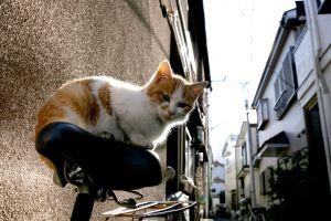 bicycle cats urban city animals japan