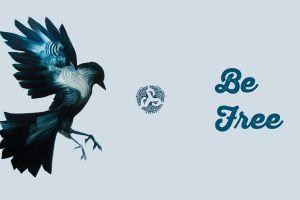 bird of prey free birds freedom planet