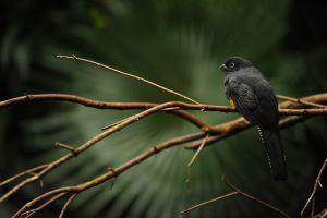 birds animals depth of field