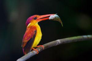 birds branch animals