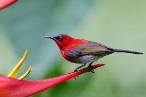 birds colorful animals wildlife sunbirds
