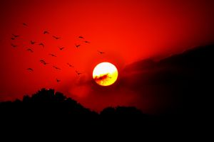 birds dark sky landscape red sun