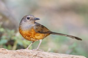 birds nature animals