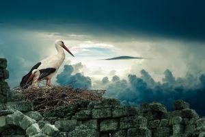 birds nature clouds nests