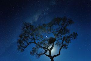 birds night sky trees starry night