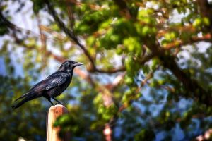 birds outdoors plants animals