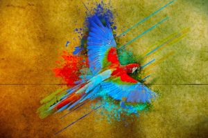 birds parrot colorful flying