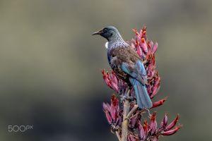 birds photography animals