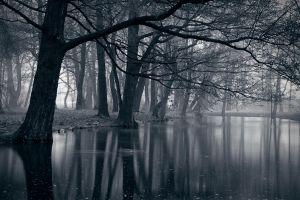 birds reflection poland leaves nature water landscape dark lake trees duck park mist