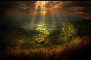 birds sky clouds trees sunlight sun rays grass field landscape village fly nature shrubs hills