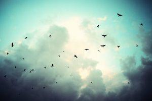 birds sky fly storm