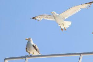 birds wings animals