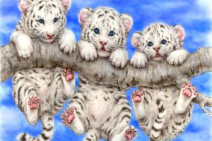 blue eyes animals baby animals