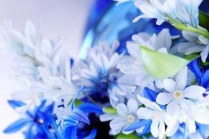 blue flowers macro plants flowers nature closeup