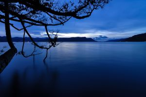 blue water trees nature dark lake
