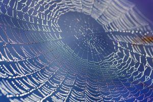 bokeh dew spider nature spiderwebs water drops