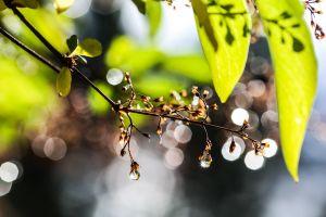 bokeh leaves sunlight water drops nature
