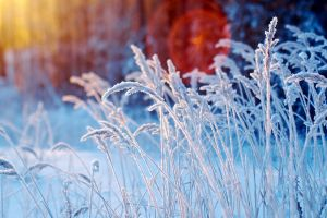 bokeh winter snow nature depth of field sunlight frost