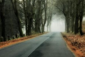 branch fall leaves road forest mist wood trees hills abandoned nature