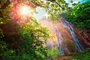 branch landscape waterfall forest sunlight trees nature lens flare