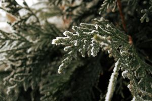 branch plants frost macro nature