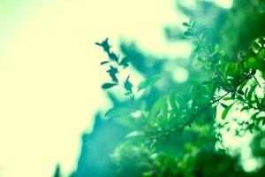 branch plants leaves green