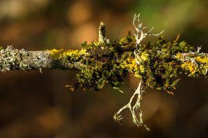 branch plants macro