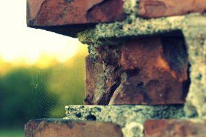 bricks spiderwebs depth of field
