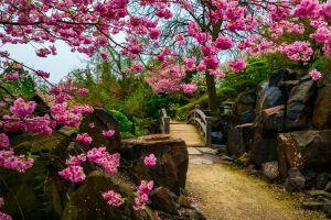 bridge garden trees plants stones flowers