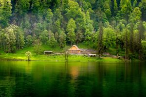 cabin mist landscape forest nature lake trees hills grass water green