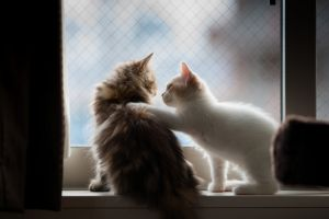 cats animals indoors window kittens