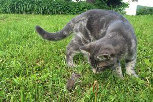 cats animals mice