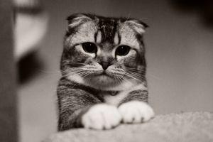 cats animals monochrome