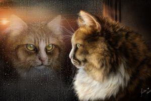cats animals render