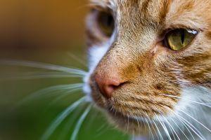 cats depth of field macro animals