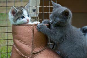 cats kittens baby animals animals