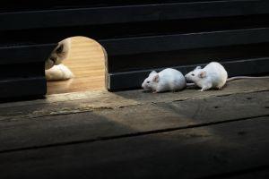 cats mice animals