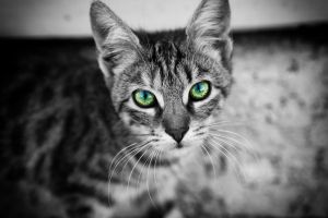 cats monochrome selective coloring animals
