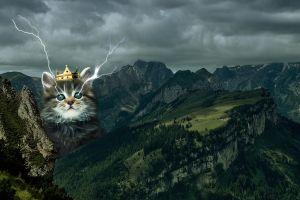 cats mountains animals digital art