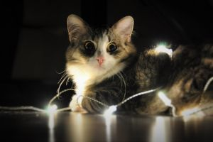 cats new year leds animals