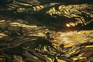 china water nature gold terraced field sunlight rice paddy landscape