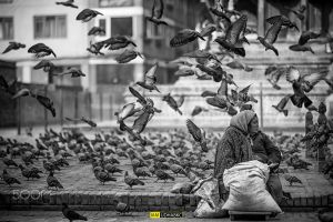 city birds photography