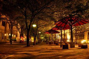 city trees street photography lights night urban