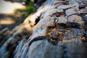 closeup nature wood