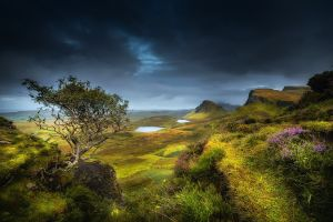 clouds plants photography sky nature landscape
