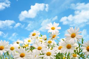 clouds white flowers plants flowers