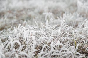 cold grass macro nature grass frost ground fall