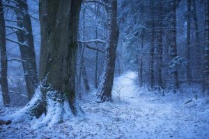 cold landscape forest snow germany winter nature trees path